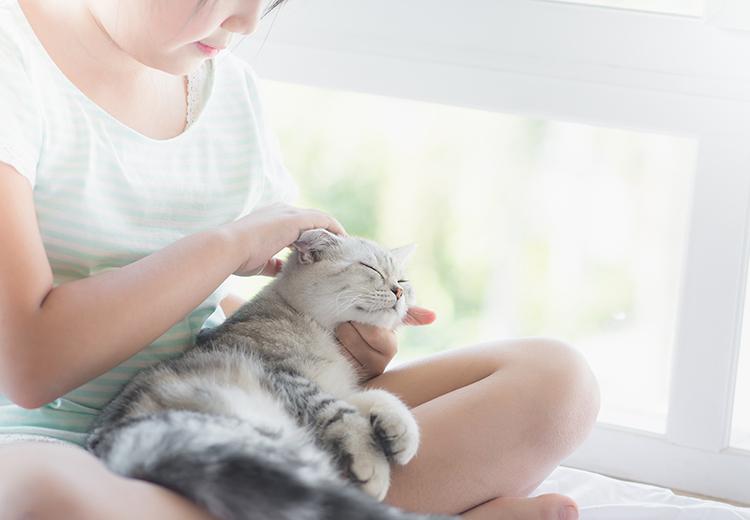 gatto che si fa coccolare