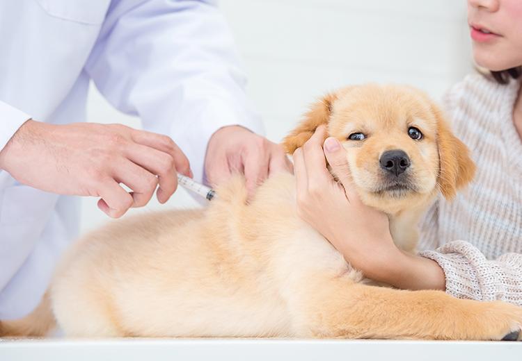 vaccinazione cane cucciolo