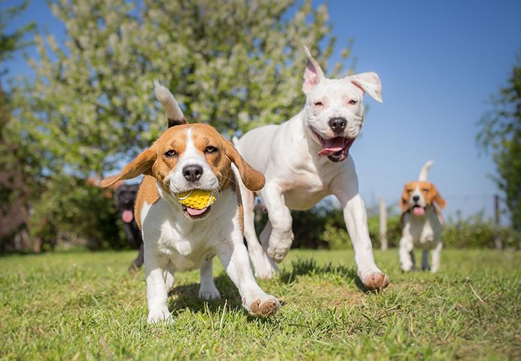 cani che giocano all'aria aperta nella bella stagione